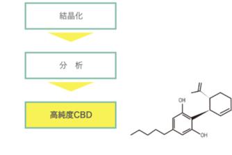 化学合成CBDの製造工程と留意点について
